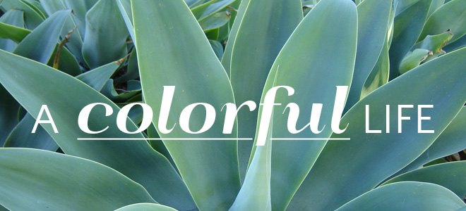 colorfullife_header