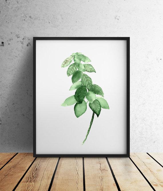 herb watercolor