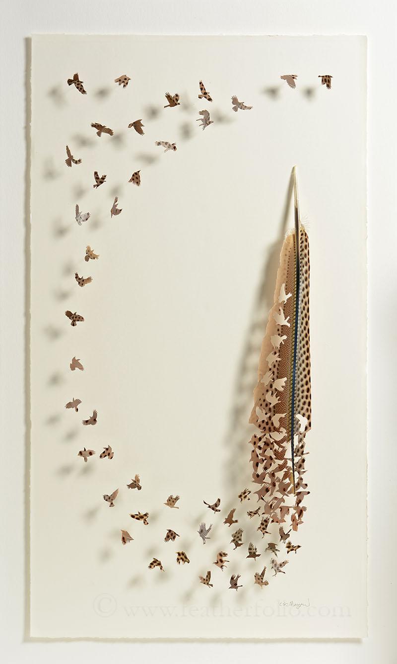 feather folio2