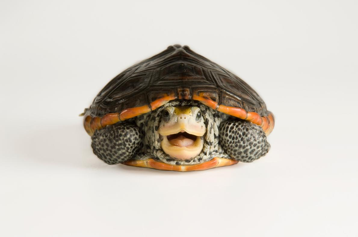 04-turtle-day-photo-ark.ngsversion.1464039000763.adapt.1190.1